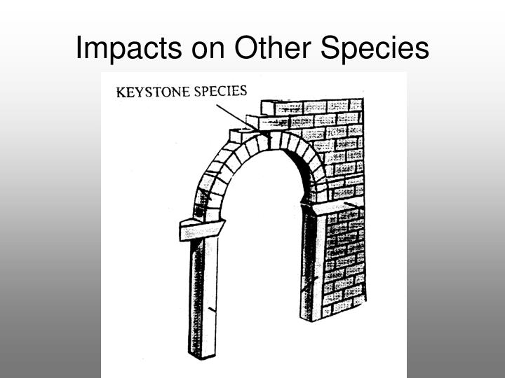 Impacts on Other Species
