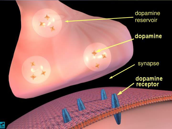 dopamine reservoir
