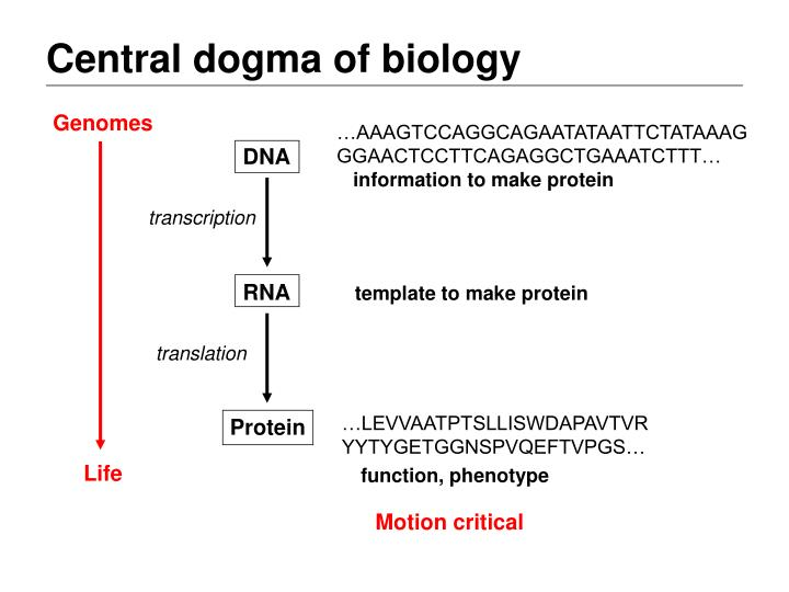 Central dogma of biology1