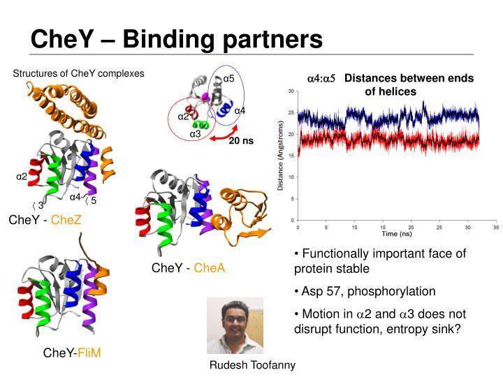 CheY – Binding partners