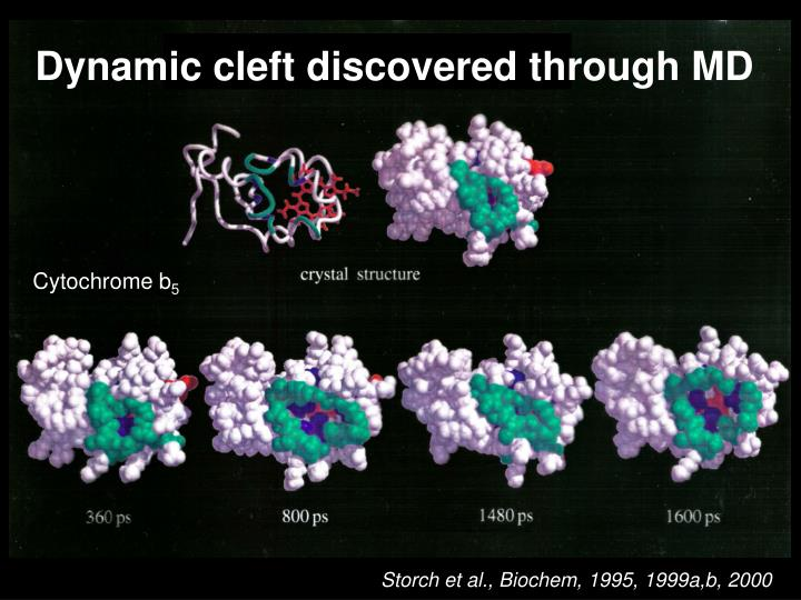 Dynamic cleft discovered through MD