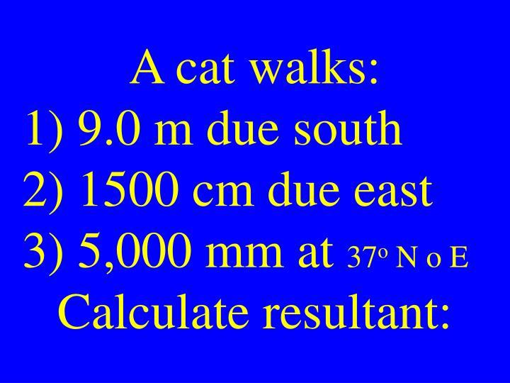 A cat walks: