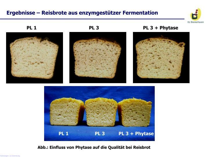 Ergebnisse – Reisbrote aus enzymgestützer Fermentation