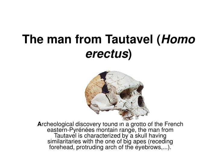 the man from tautavel homo erectus n.