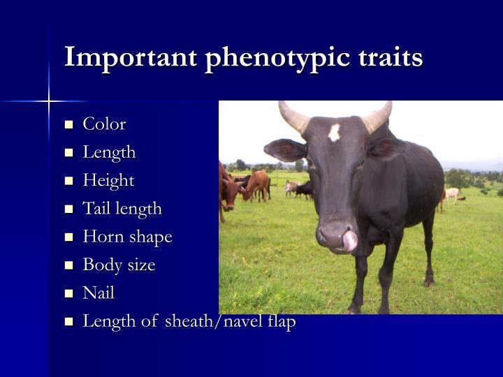 Important phenotypic traits