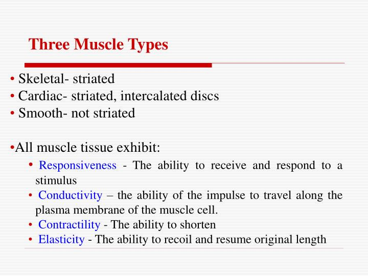 Ppt Structure And Function Of Skeletal Muscle Powerpoint