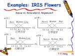 examples iris flowers