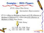 examples iris flowers3