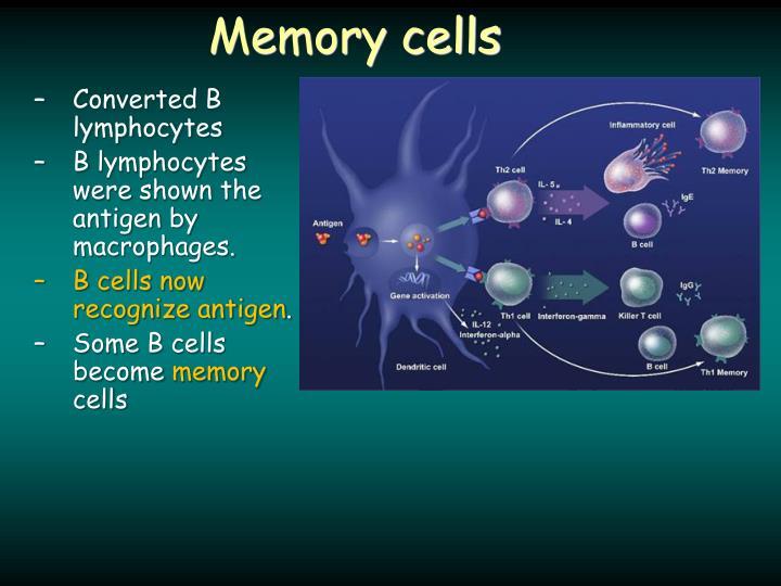 Memory cells