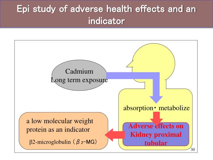 low molecular weight model study of