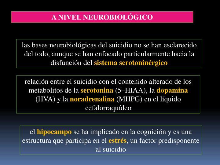 A NIVEL NEUROBIOLÓGICO