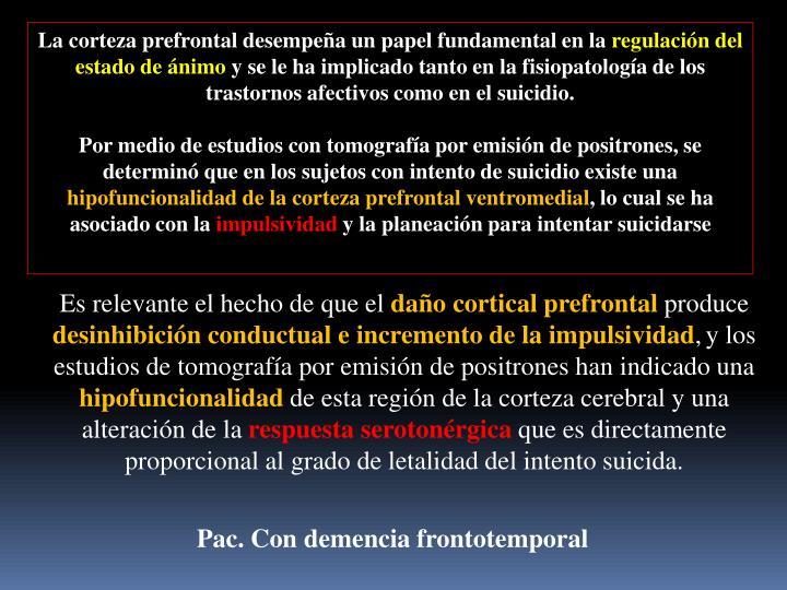 La corteza prefrontal desempeña un papel fundamental en la
