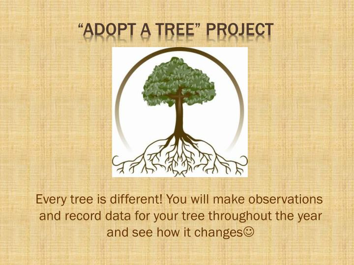 adopt a tree project n.
