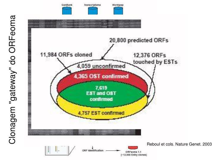 "Clonagem ""gateway"" do ORFeoma"