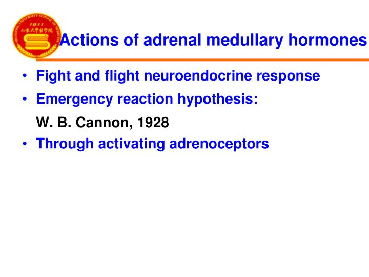 Actions of adrenal medullary hormones