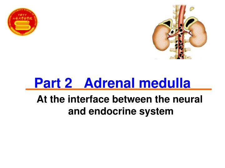 Part 2   Adrenal medulla