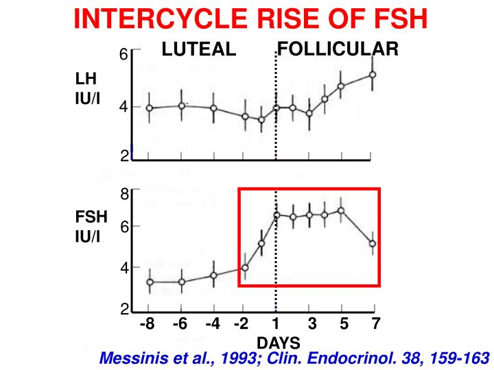 INTERCYCLE RISE OF