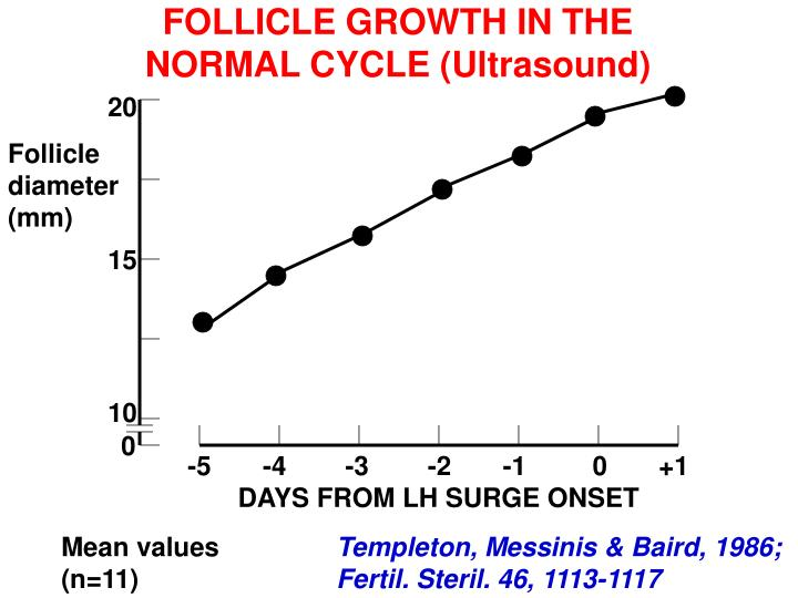 FOLLICLE GROWTH IN THE