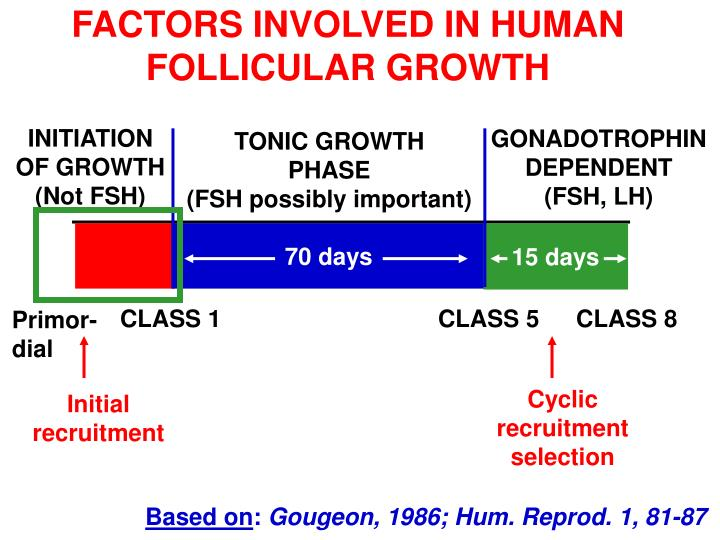 FACTORS INVOLVED IN HUMAN FOLLICULAR GROWTH
