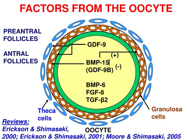 FACTORS FROM THE OOCYTE
