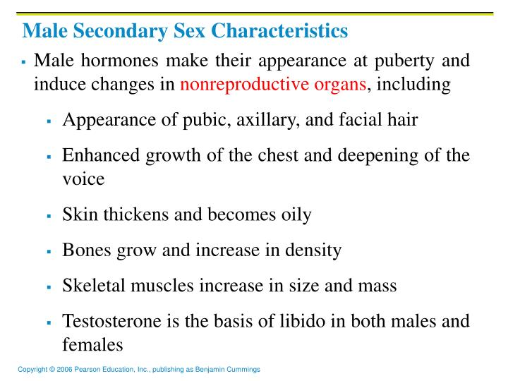 secondary-sex-characteristics-of-males-sex-position-porn-gif