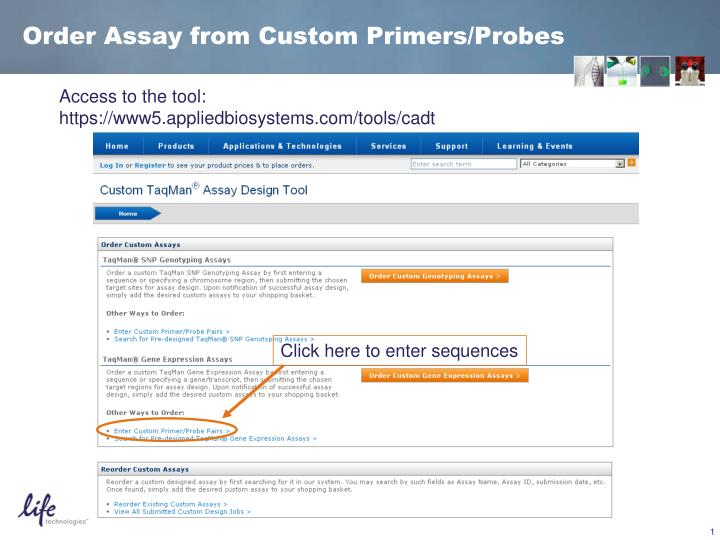 Ppt Order Assay From Custom Primers Probes Powerpoint Presentation Free Download Id 4280415