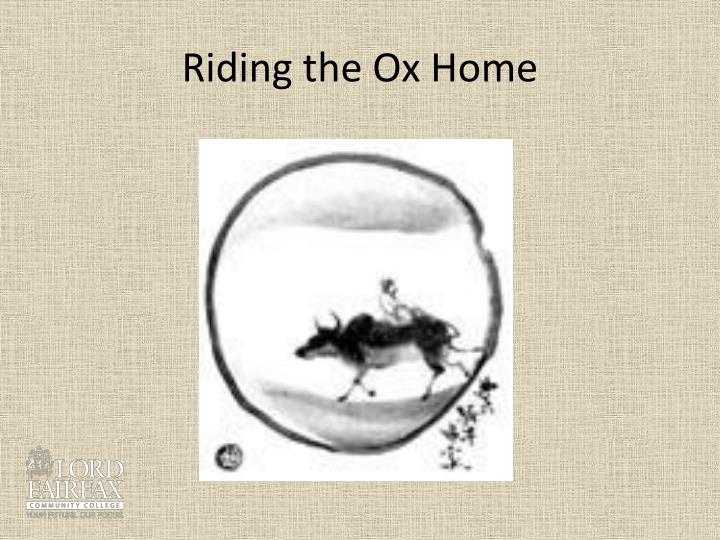 Riding the Ox Home