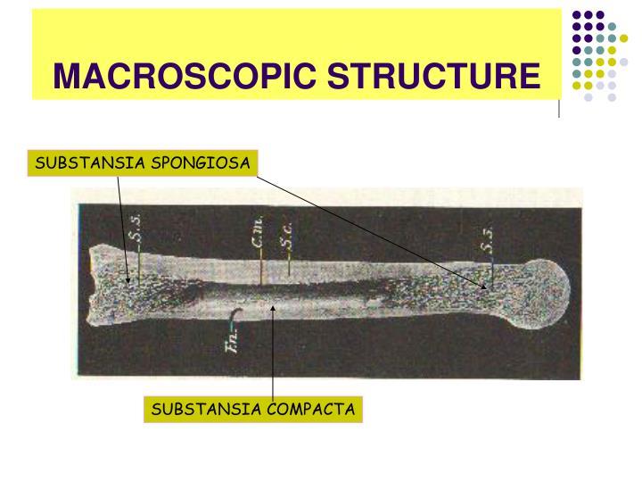 MACROSCOPIC STRUCTURE