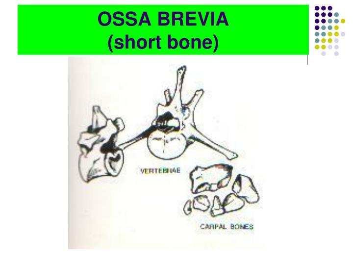 OSSA BREVIA