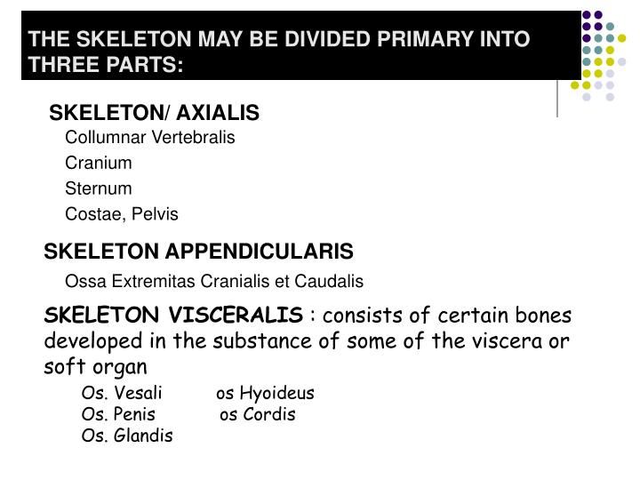 THE SKELETON MAY BE DIVIDED PRIMARY INTO THREE PARTS: