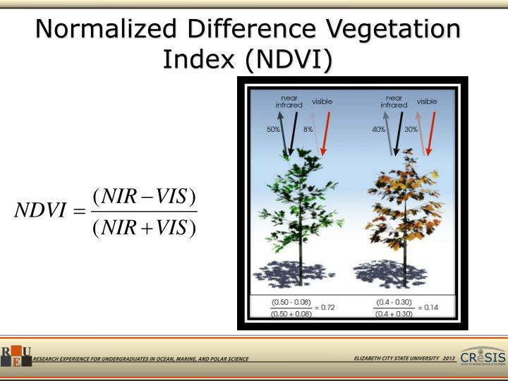 Normalized Difference Vegetation Index (NDVI)