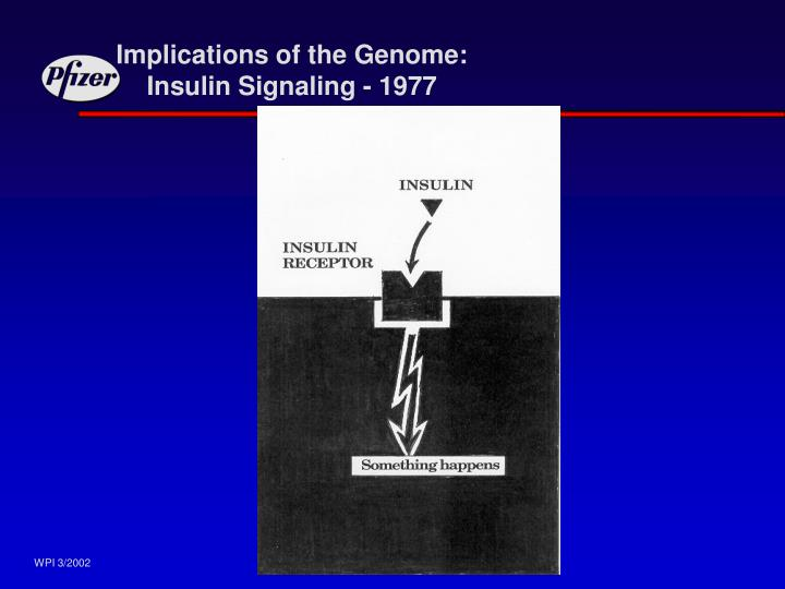 Implications of the Genome: Insulin Signaling - 1977