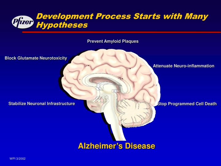 Development Process Starts with Many Hypotheses