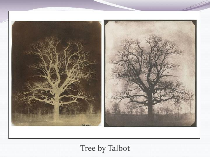 Tree by Talbot