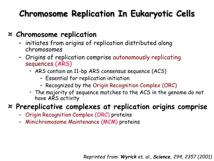 Chromosome Replication In Eukaryotic Cells