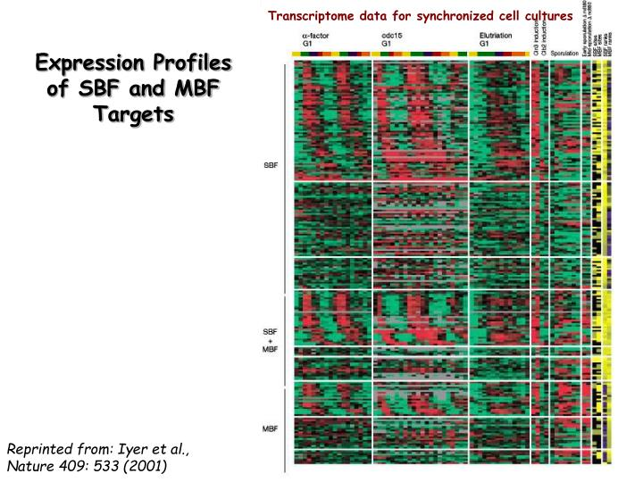 Transcriptome data for synchronized cell cultures