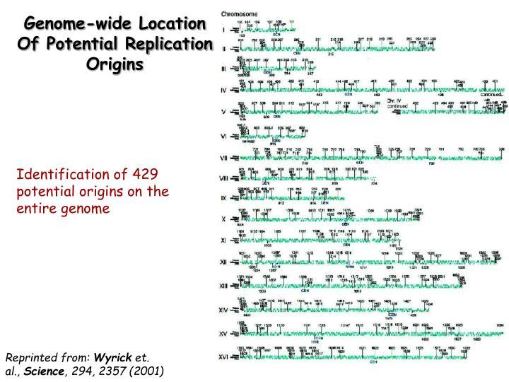 Genome-wide Location Of Potential Replication Origins