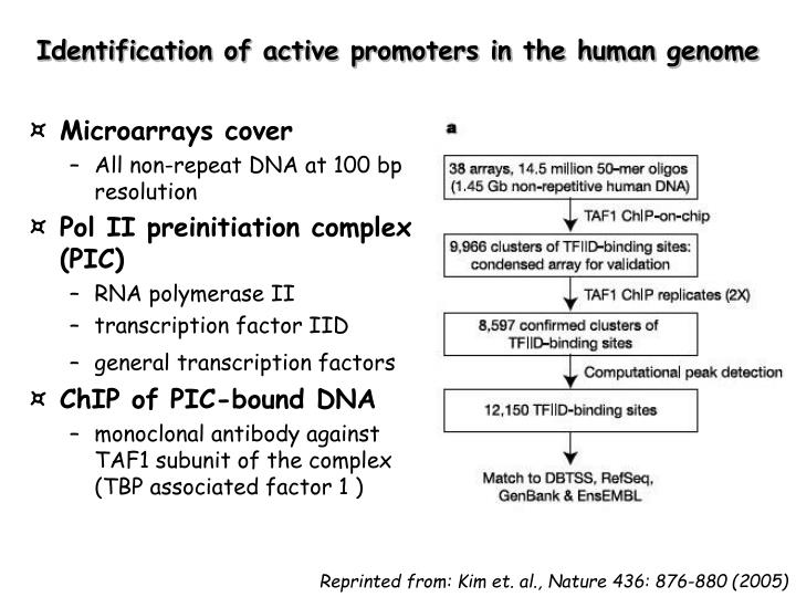 Identification of active promoters in the human genome