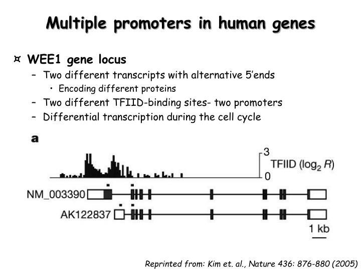 Multiple promoters in human genes