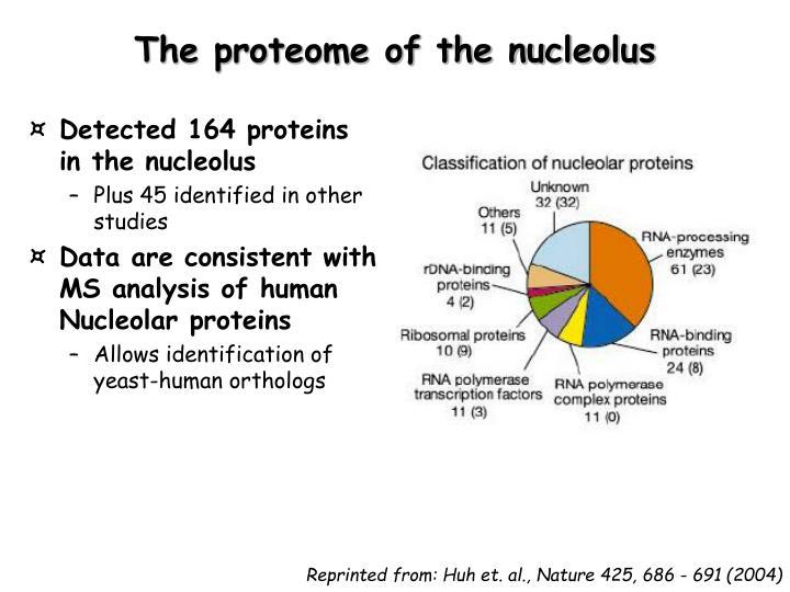 The proteome of the nucleolus