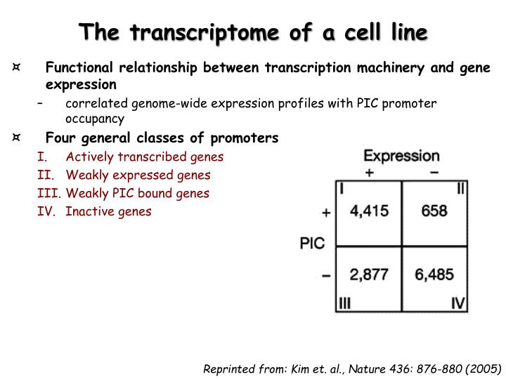 The transcriptome of a cell line