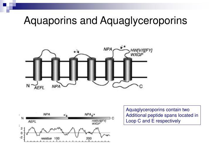Aquaporins and Aquaglyceroporins