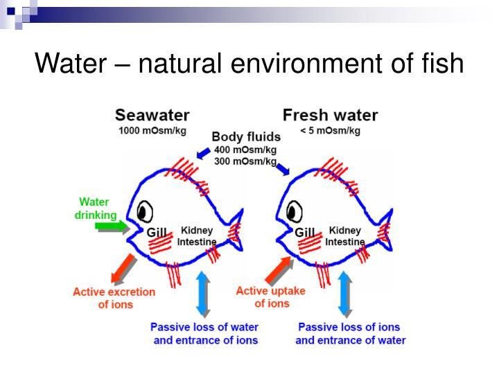Water natural environment of fish