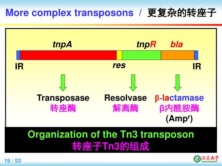 More complex transposons  /