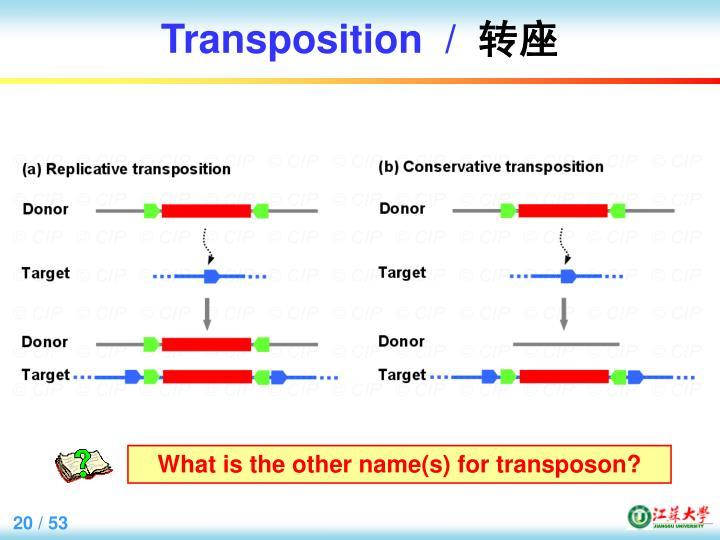 Transposition  /