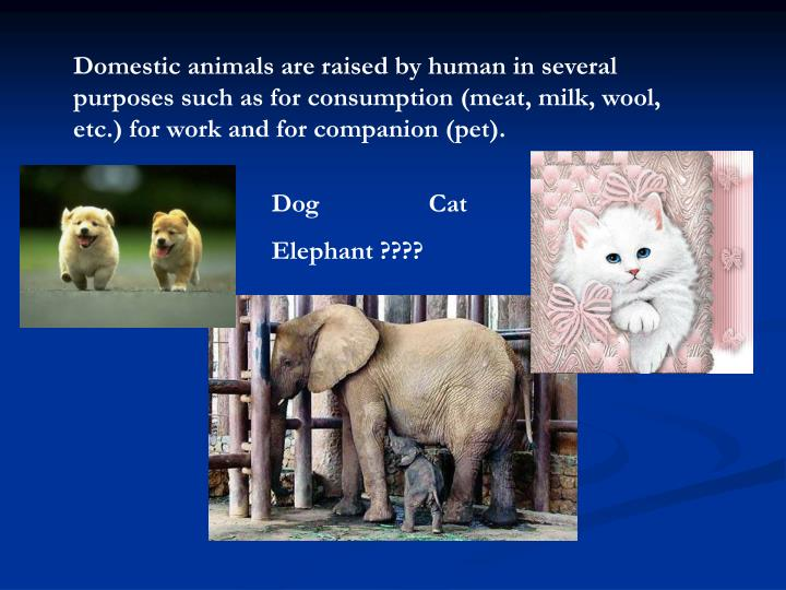 Domestic animals are raised by human in several purposes such as for consumption (meat, milk, wool, ...