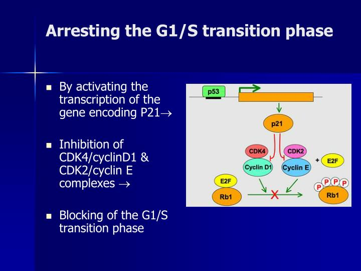 Arresting the G1/S transition phase