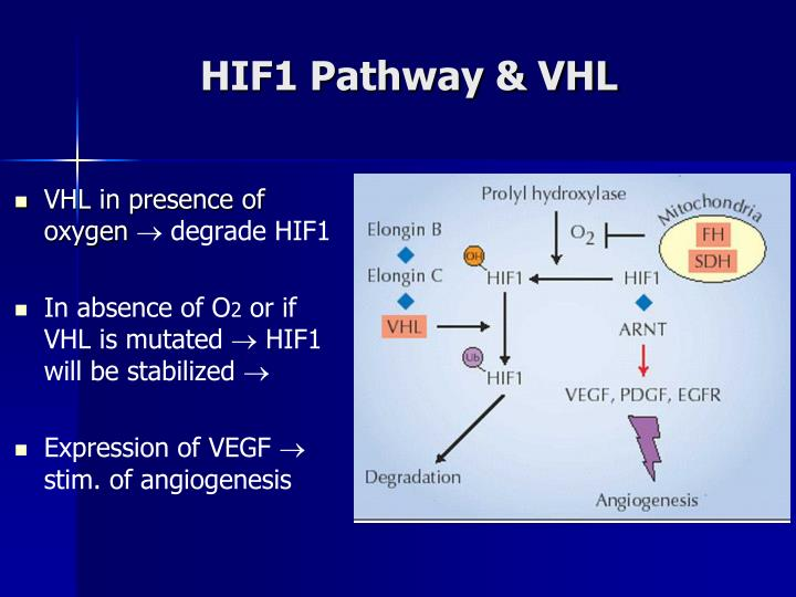 HIF1 Pathway & VHL