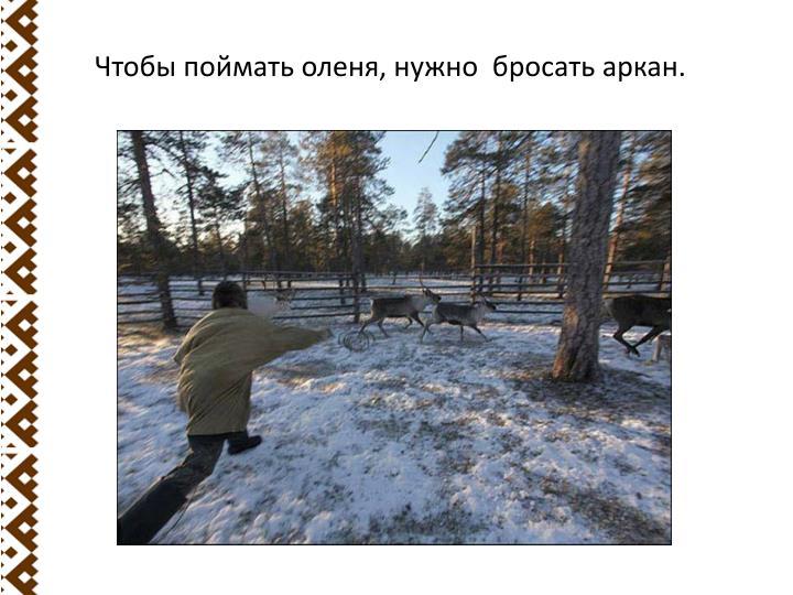 Чтобы поймать оленя, нужно  бросать аркан.