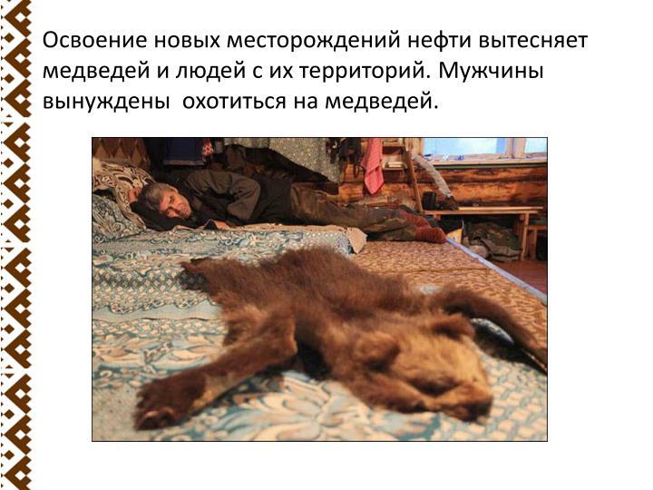 Освоение новых месторождений нефти вытесняет медведей и людей с их территорий. Мужчины вынуждены  охотиться на медведей.